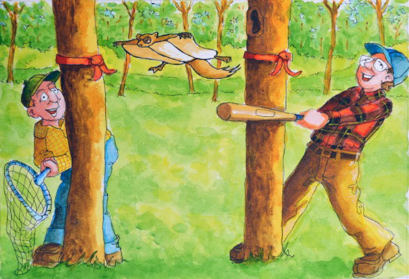How to catch a flying squirrel - Illustration by Rob Gillespie