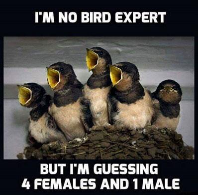 I'm no bird expert