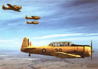 Yellow Harvard training planes