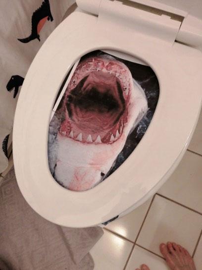 Toilet Shark